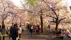 Ueno Park Jepang Jalan jalan Jepang Wisata Ke Jepang Paket Tour Ke Jepang