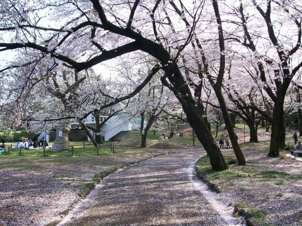 Yoyogi Park tokyo jepang liburan ke Jepang murah 2016 paket liburan ke jepang murah tips liburan ke Jepang murah biaya liburan ke Jepang murah liburan jepang murah