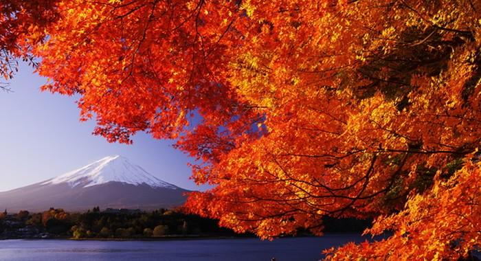Mencari Tour Ke Jepang