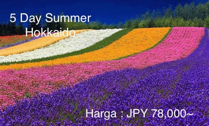 Paket Tourkejepang Lavender Hokkaido